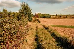 Road, gras, veld, boerderij, wolk, boom, plant, graan