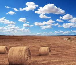 field, farm, straw, bale, grain, sky, road