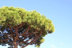 tree, treetop, gradan, cloud, flora, nature