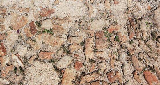 stone, ground, plant, texture, leaf, sand