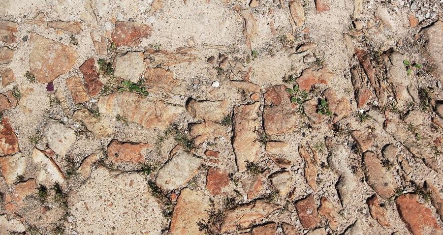 Piedra, suelo, planta, textura, hoja, arena