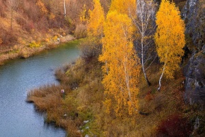 forest, river, tree, shore, grass, water, autumn