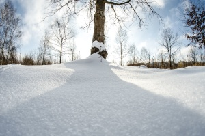 snow, winter, cold, ice, wood, forest, shadow, sun