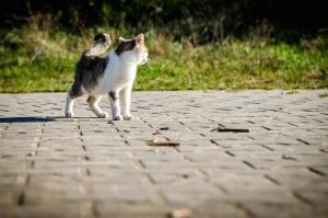 Gatto, animale, animale domestico, cemento, piastra, erba