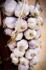 garlic, white, food, spice, plant, vegetable