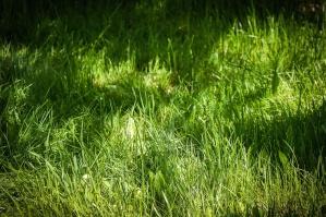Herbe, prairie, plante, croissance, printemps