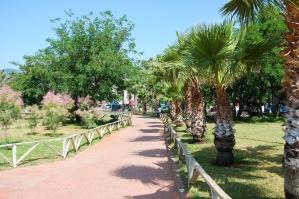 Κήπος, αυλή, palm, καλοκαίρι, δέντρο, γρασίδι, τοπίο, πάρκο, Υπαίθριος, διακοπές