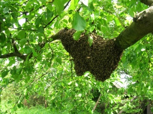 bee, insect, swarm, wood, forest, leaf, nature