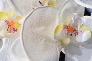 flower, blossom, petal, floral, orchid, pollen, herb, bloom