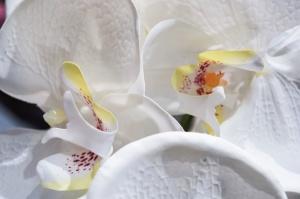 flower, petal, white, plant, flora, pollen, nectar