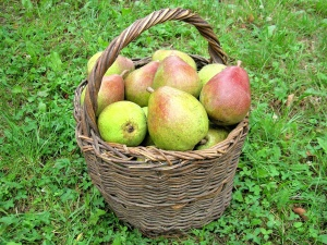 fruit, pear, food, basket, delicious, fresh, sweet, nutrition