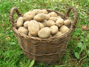 basket, food, potato, grass, diet, plant, organic