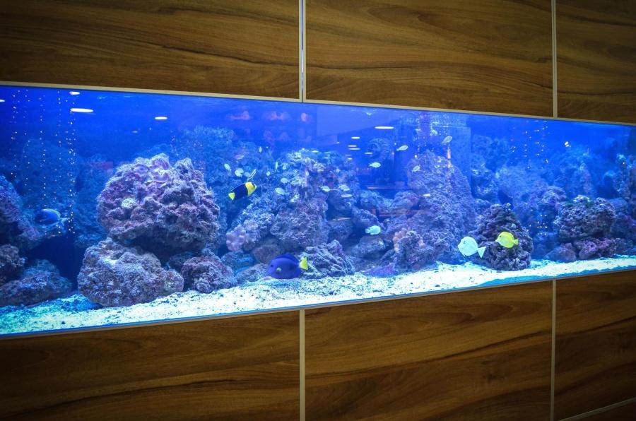 aquarium, water, stone, fish, animal