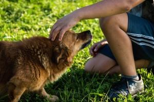 cute, dog, animal, pet, fur, man, grass