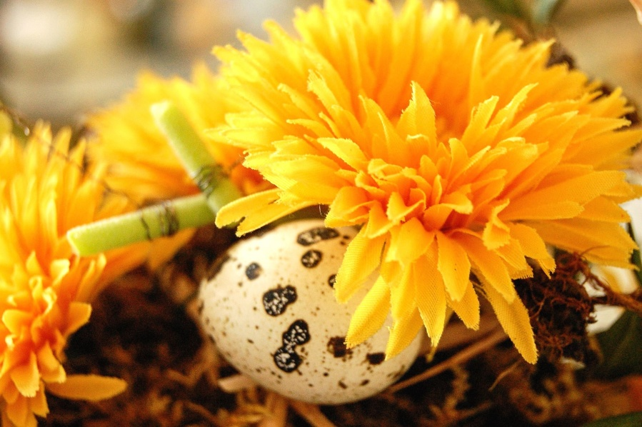 yellow, flower, plant, flora, bloom, blossom, garden