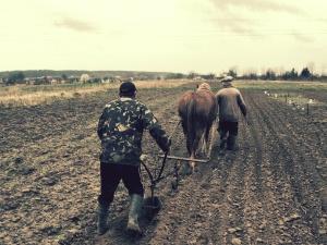 Campo, arado, caballos, gente, agricultura, arando, paisaje