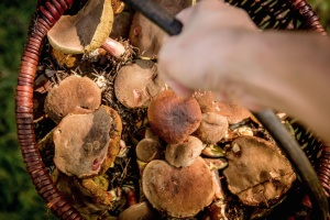 basket, hand, mushroom, plant, flora