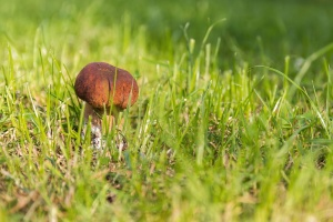 mushroom, grass, plant, meadow, flora, green
