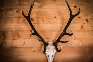 hunting, deer, trophy, horn, wall, wood, texture, animal