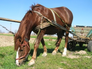 Cheval, herbe, voiture, champ, ciel, animal