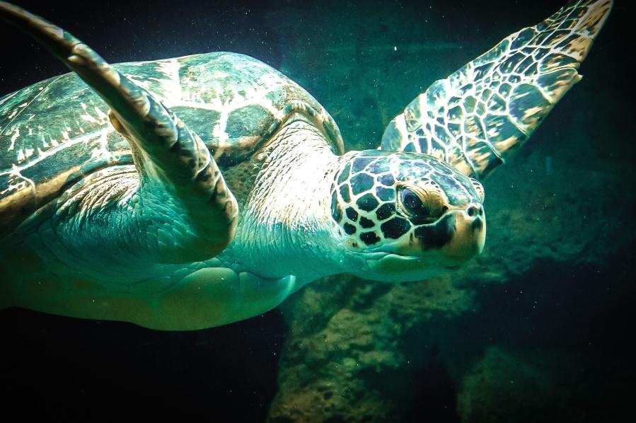 turtle, animal, underwater, armor, head