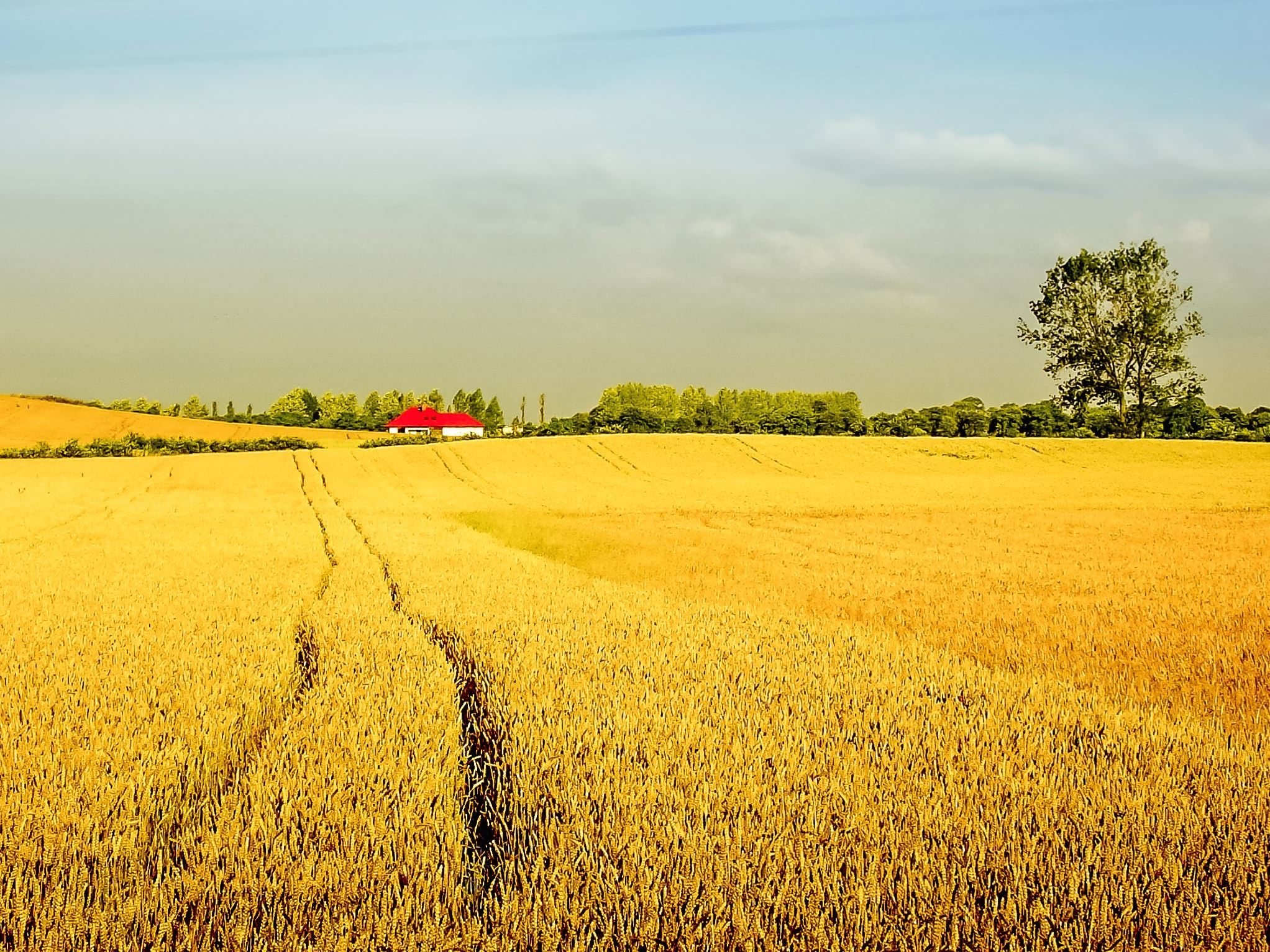 Free picture: agriculture, field, wheat, field, house ...