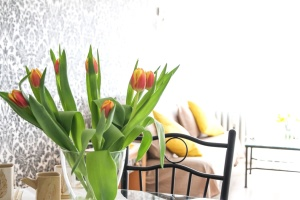 Pianta, fiore, primavera, tulipano, fiore, interno