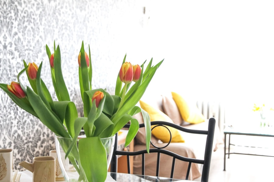 plant, flower, spring, tulip, flower, interior
