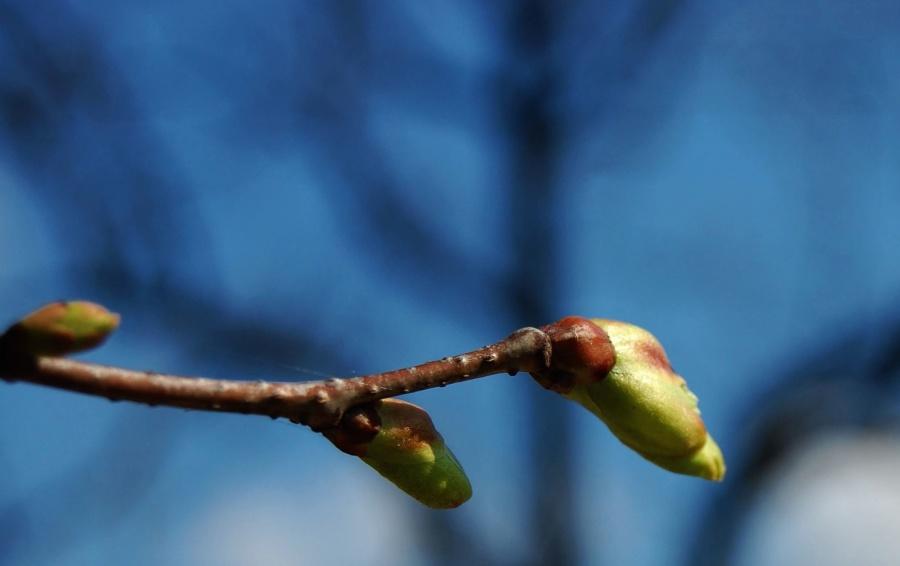 plant, branch, leaf, bud, leaf, spring, garden, tree