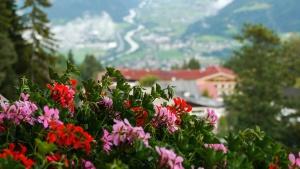pink, flower, plant, petal, garden, house, mountain, landscape