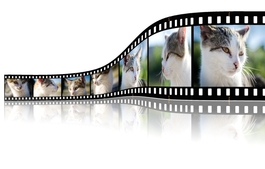 graphic, design, photomontage, cat, animation
