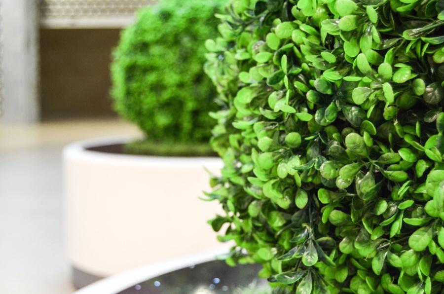 plant, bush, green, leaf, garden, leaf, flower pot