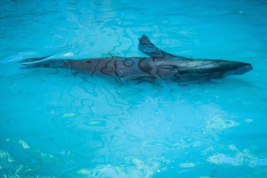 shark, water, fish, ocean, sea, underwater, swimming, diving