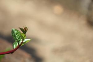 Feuille verte, branche, plante, écologie