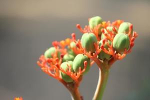 wild flower, bud, plant, leaf, garden, spring, flora, summer, petal