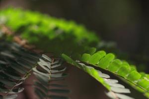 잡 초, 화분, 식물, 잎, 나물, 단풍
