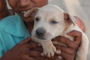 момчето, кученцето, куче, животно, териер куче, домашни любимци