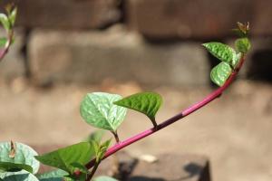 Feuilles, fermer, herbe, plante, jardin, croissance, flore, semis, printemps
