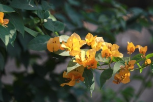 아름 다운, 꽃, 식물, 약초, 나무, 암 꽃 술