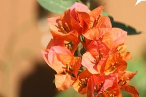 orange flower, leaf, flower, petals