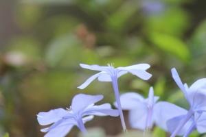 Lumière, bleu, fleurs, pré, plante