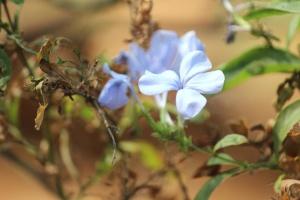 leaves, flower, herb, plant, pistil