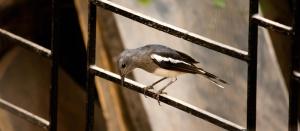 새, 창, 팃, 동물