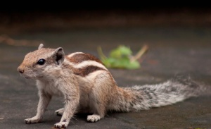 squirrel, animal, rodent, animal, cute, fur