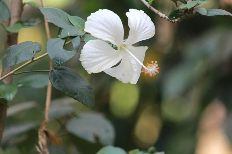 white flower, branch, flower, plant, shrub