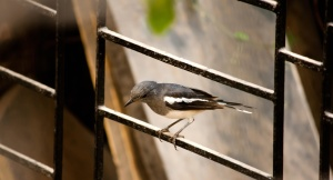 bird, sitting, fence, metal, animal