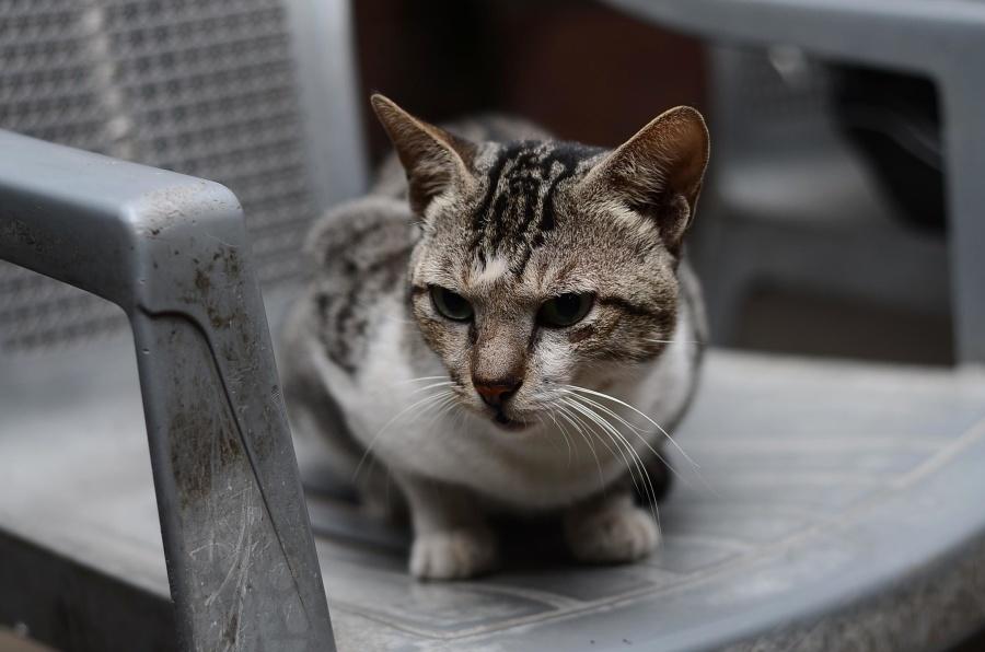 Gatto, sedia, gatto, felino, animale, gattino, pelliccia, animale domestico, domestico, baffi, gattino