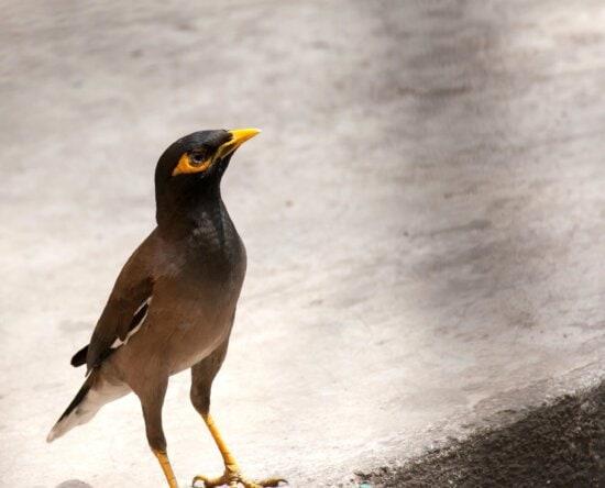 robin bird, bird, animal