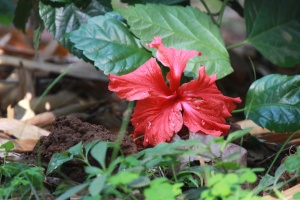 암 꽃 술, 봄, 허브, 꽃, 식물, 꽃가루