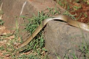 snake, garden, lizard, reptile